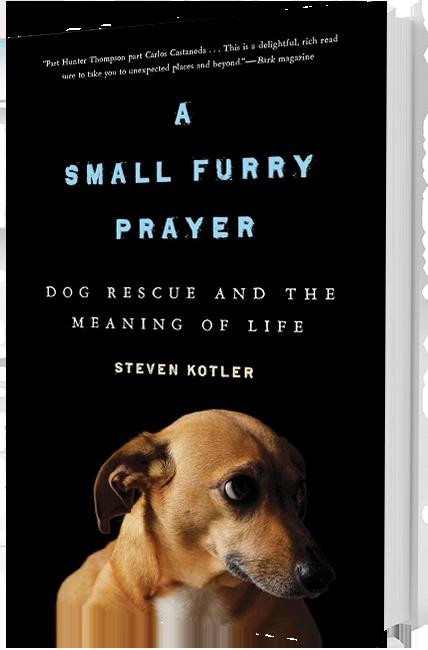 small furry prayer book